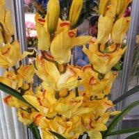 Красота - это страшная сила! Это орхидея!!! :: Galina194701