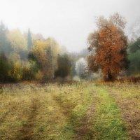 Осень уходящая... :: Валерий Молоток