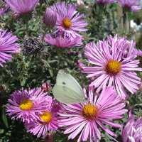 Бабочка на цветке :: Юлия Закопайло