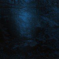 ночной лес :: Владимир Хижко