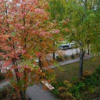Из окна... :: Владимир Холодницкий