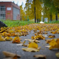 Осень 2014 :: Denis Osipov