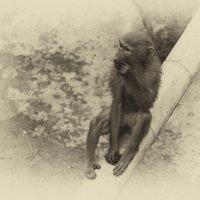 zoopark :: Slava Hamamoto