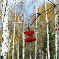 Осень в лесу. :: Оксана Н
