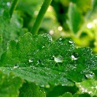 После дождя :: Пётр П