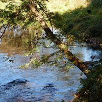 На реке Полота..... :: Наталья Полочанка