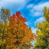 Осень :: Пётр П
