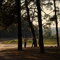 В сосновом лесу :: Татьяна Кретова
