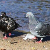 – И вправду, мокрая ты  курица, но… до чего же, хороша. :: Надежда Млат