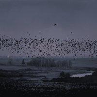 Ночные птицы :: Валерий Талашов