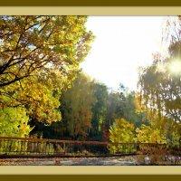 Сквозь осеннее солнце :: Лидия (naum.lidiya)