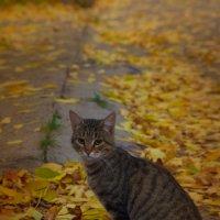 Осенний кот :: Nikkkos Kas