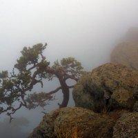 Сосна туманная :: Михаил Баевский