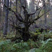 лесной дракон :: Сергей