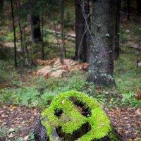 """Крик в лесу или """"какой чудесный пень"""" :: Дмитрий Ромашев"""