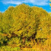 Осенняя роскошь :: Светлана