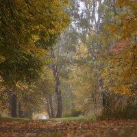 Осень в Коломне :: sorovey Sol