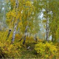 . Растворяясь в осеннем тумане И скользя по осенней листве, :: galina tihonova