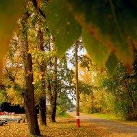 Осень в городе... :: Павел Зюзин