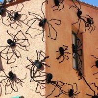 Нашествие гигантских пауков :: Vladimir 070549