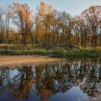 Порыжела листва и опала :: sorovey Sol