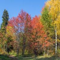 Разноцветная осень :: Леонид Никитин