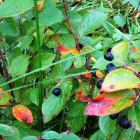 Последние ягодки в этом году :: Фотогруппа Весна.