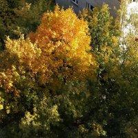 Осень. Измайлово. :: Елена Каталина