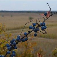 Осенний  урожай :: Marina Timoveewa