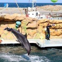 Дельфинарий :: Диана С
