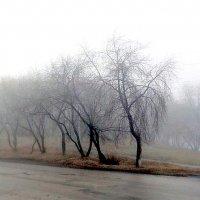 Осенний туман ... :: Андрей Смирнов
