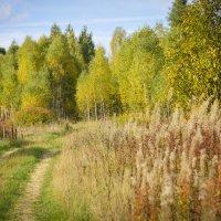 Дорога в осень :: N. Efimkina