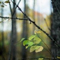 Осень :: Паша