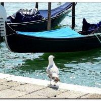 Италия, Венеция, чайка :: Наталья (Nata-Cygan) Цыганова