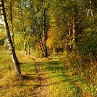 Золотая Осень в Лосином острове DSC08848 :: Андрей Лукьянов