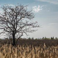 одинокая яблоня в поле,просит листьев и лето у неба... :: Алексей -