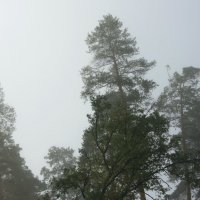 В  тумане... :: Валерия  Полещикова
