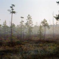 На болоте :: Sergey Apinis