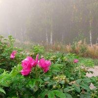 Последние цветы осени :: Николай Белавин