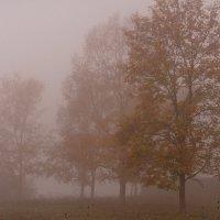Осень :: Любовь Нефёдова