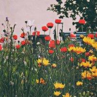 Цветы :: Полина