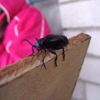 Усатый жук :: Анна