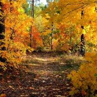 Сгорающей листвою не согреть... :: Лесо-Вед (Баранов)