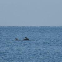 Дельфины :: Татьяна Лобанова