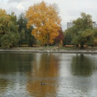 Осень в парке :: Наталья Александрова