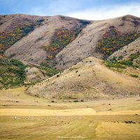 Осень на горах - Армения :: Мисак Каладжян