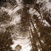 Лес в отражении. :: сергей лебедев