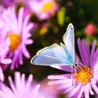 осенние бабочки :: Светлана Попова