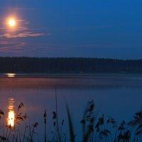 Лунная ночь :: Ирина Соколова