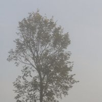 Туман над Нижним... :: Дмитрий Гортинский